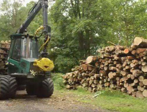 Throwback Thursday: Ancient woodland restoration in Ireland