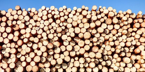 softwood poles