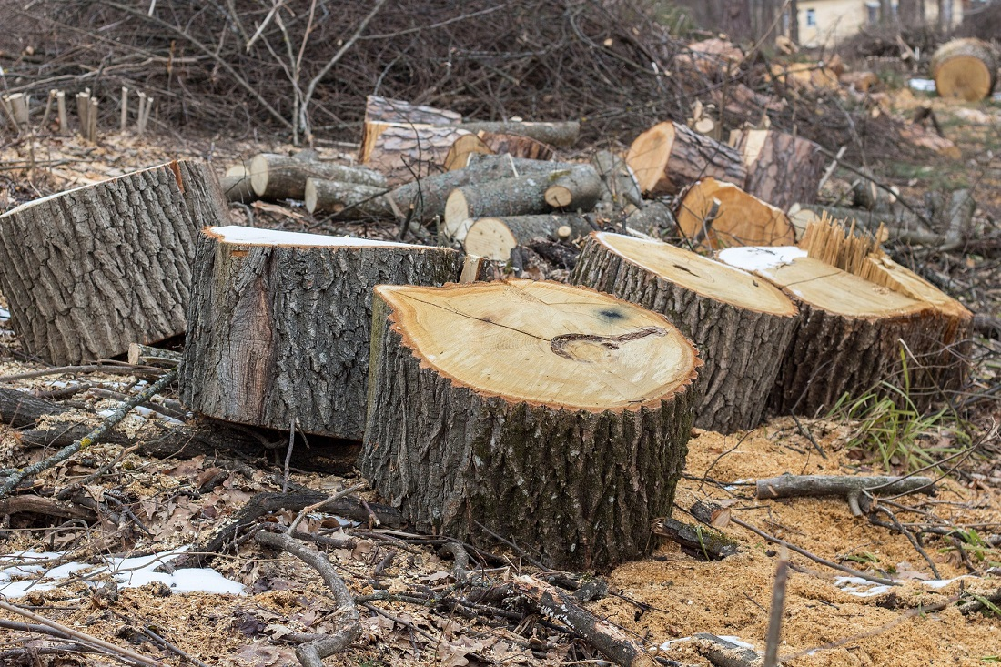 Check out the sawmilling process