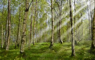 Forest management has a positive impact on the climate.