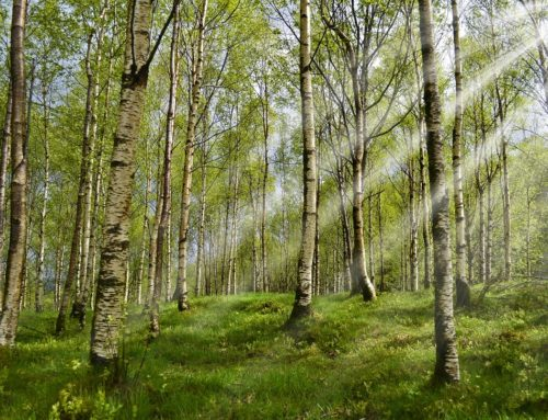 Building with timber is  'climate smart'