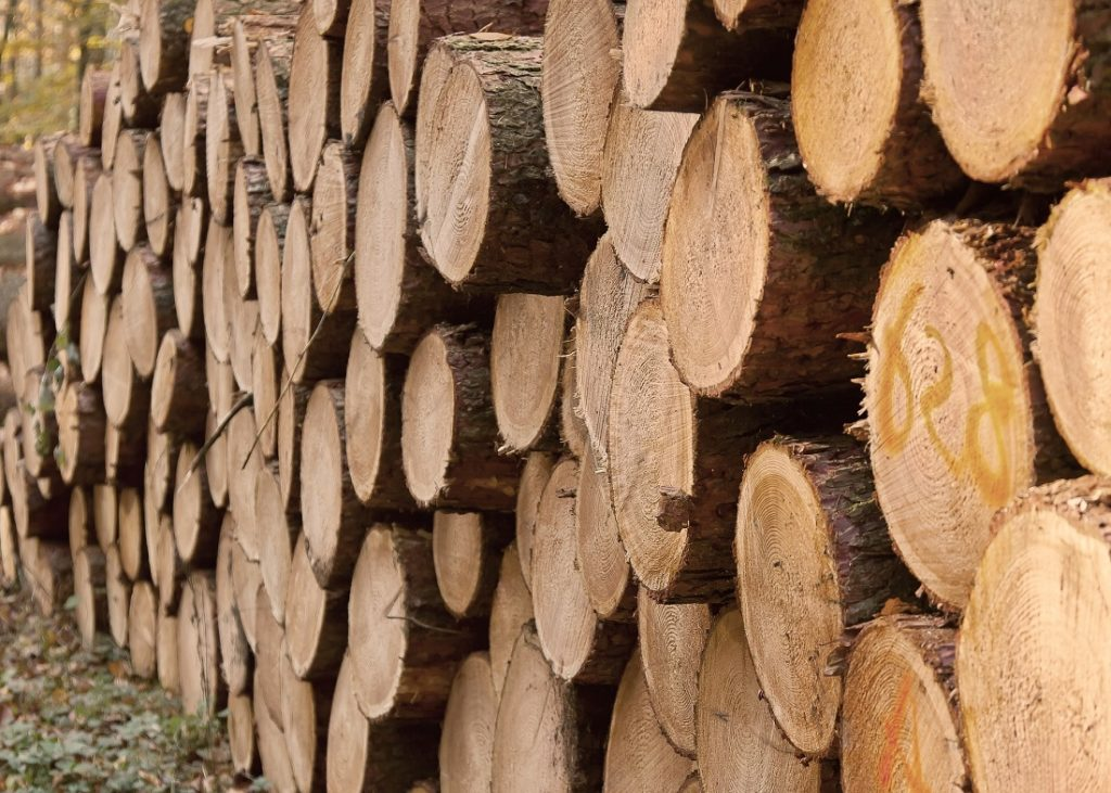 The Forest Sector Charter Council will be hosting workshops which will benefit various stakeholders in the forestry industry. Image credit: Pixabay