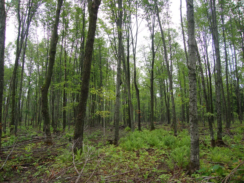 One of Sappi's forests in a nature reserve. Image credit: Sappi
