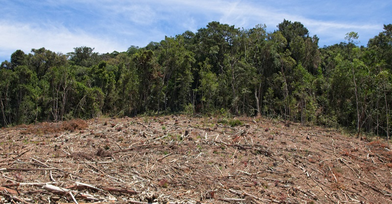 Indigenous Cameroon forest is being cleared for a palm oil project. Image credit: Afrik21