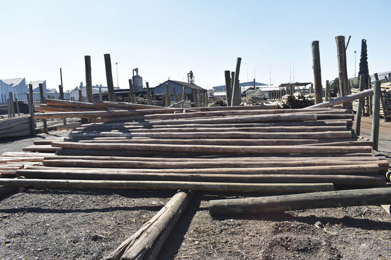 Gum poles (untreated as well as the various treatment types) can additionally be slabbed on one or both sides – for fencing slats, survey poles, guardrail posts and blocks, sawn pine, sawn gum, trellis (standard and fancy) garden edging, picket fencing and outdoor wooden furniture.