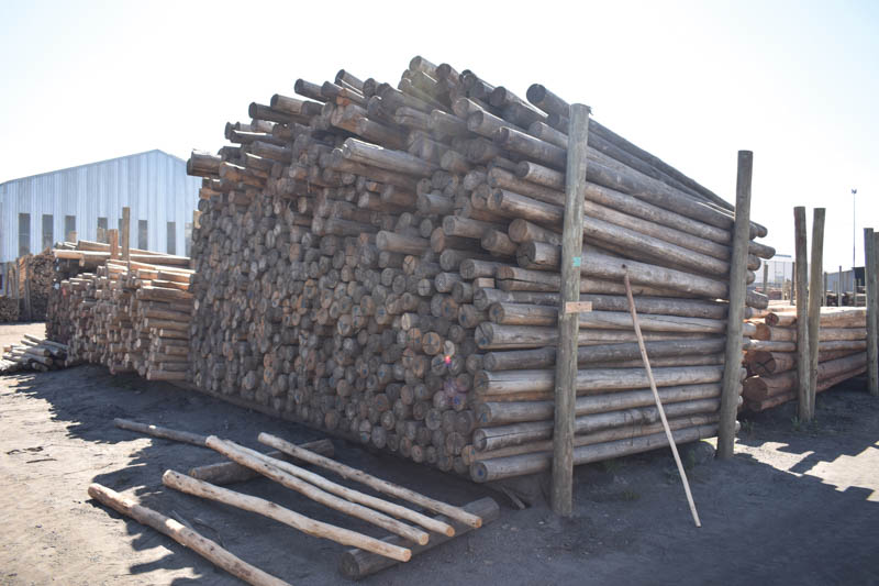 A range of gum poles and sawn timber is distributed to the building, civil engineering, road building, packaging and thatching industries as well as building material merchants.