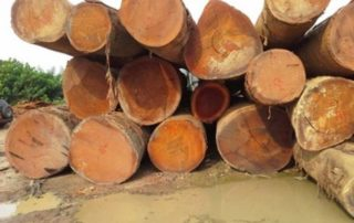 High rainfall in countries like Cameroon and Gabon has adversely affected the production and processing of timber products. Image credit: Timber industry news