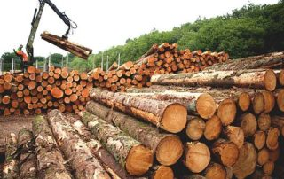Ghana's timber industry is expected to benefit from the African Continental Free Trade Agreement. Image credit: Ghana talks business