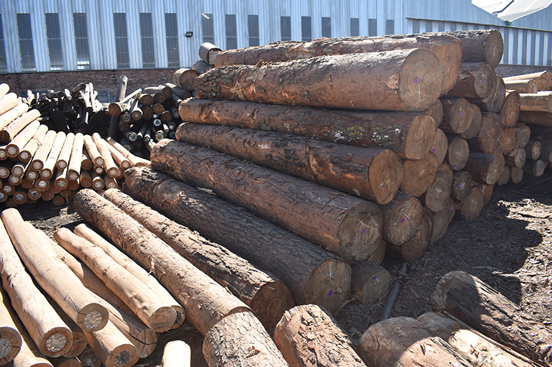 Timber stores a lot of carbon and thus contributes to the fight against climate change. Image credit: Leon Louw