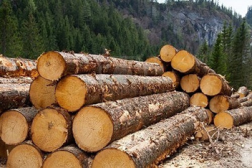 Timber sales in Ghana dropped sharply in 2020.  Image credit: Modern Ghana