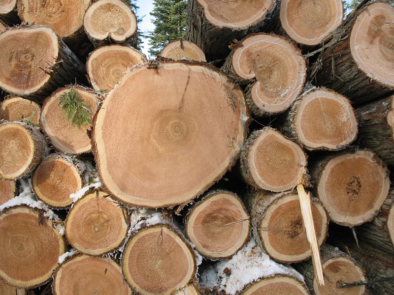 Timber prices and demand stable in West Africa