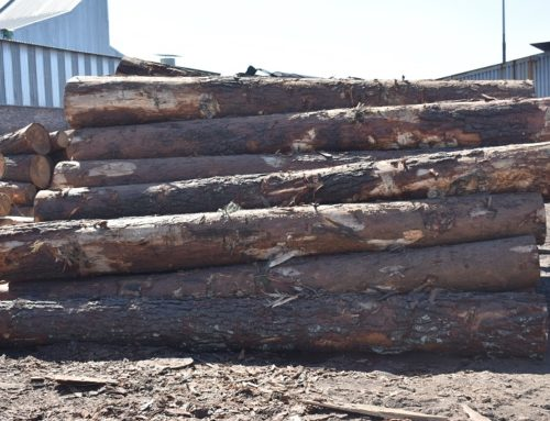 The potential of engineered wood as a sustainable construction material