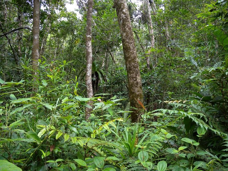 Madagascar rainforest. Photo by Wikicommons