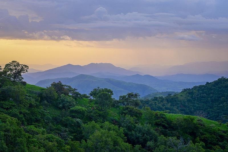 http://www.timberiq.co.za/wp-content/uploads/2021/04/Africa-forests.jpg