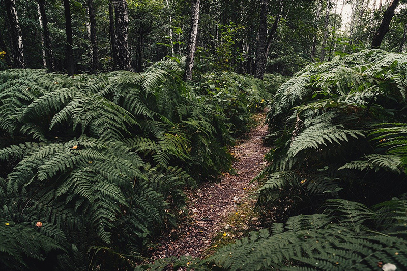 Restoring our forests provides a path to recovery and well-being