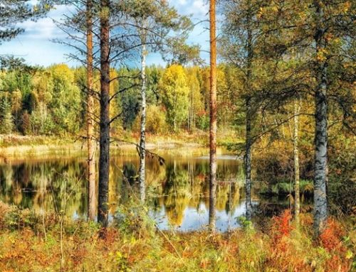 Finland reins in foreign forest acquisitions