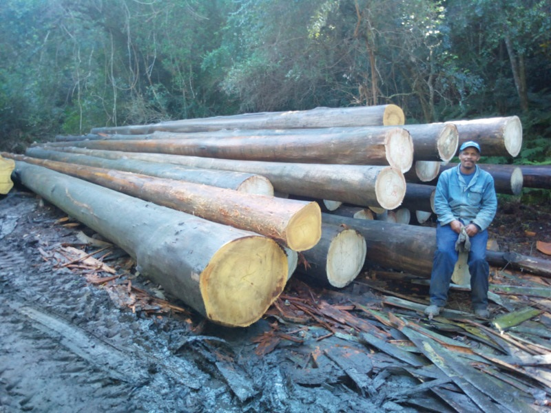 The biggest log is 7m³ volume, estimated weight somewhat over 7 tons (t). Crane trucks do not generally move logs of this size.
