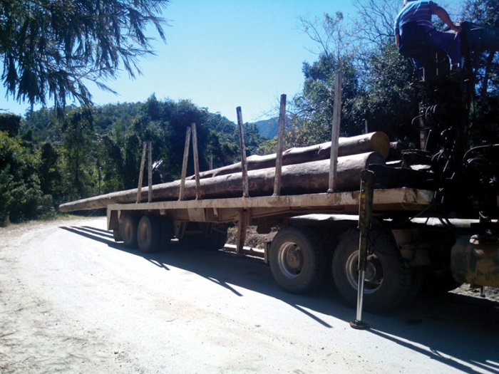 Some of the logs are over 20 metres long, sometimes leaving 10 metres hanging over the back of the trailer
