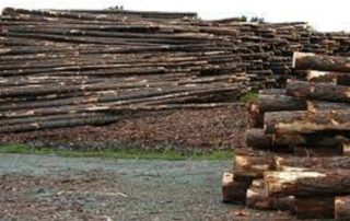 There are some 20 African countries selling logs to Vietnam and contributing 33% of the total volume of logs imported into Vietnam. Photo by Wiki Commons