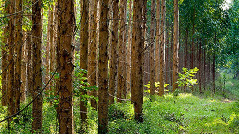 Forestry plays a key role in protecting biodiversity.Photo by Sappi