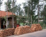 Vietnam's wood product exports have shown impressive growth. Photo by Wikimedia. Commons