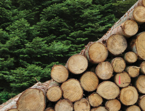 SAUPA's role in treating wooden poles