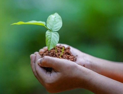 5 million seedlings to rebuild NSW forests