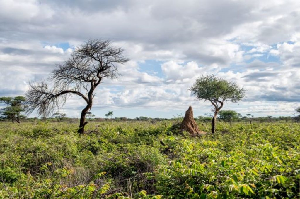 In Namibia, restoration of degraded forest landscapes has allowed grass to come back to allow a more natural ecosystem for fauna and flora. Image:©FSC Southern Africa