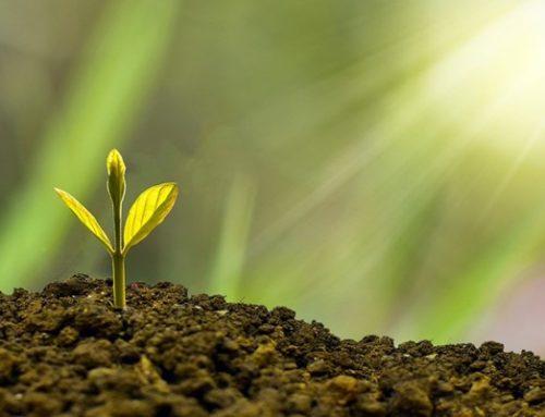 BURKINA FASO: Network of parliamentarians on the environment plants 300 trees